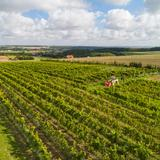 Image: Kresy Vineyard